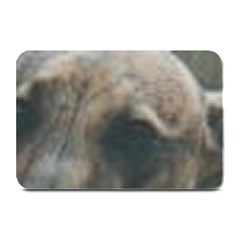 Whippet Brindle Eyes  Plate Mats