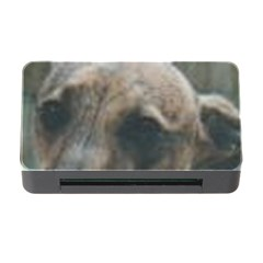 Whippet Brindle Eyes  Memory Card Reader with CF