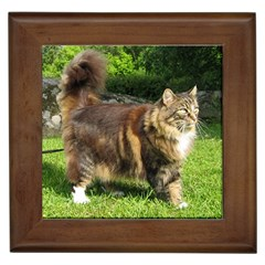 Norwegian Forest Cat Full  Framed Tiles