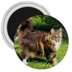 Norwegian Forest Cat Full  3  Magnets