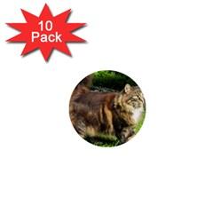 Norwegian Forest Cat Full  1  Mini Buttons (10 pack)