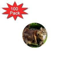 Norwegian Forest Cat Full  1  Mini Buttons (100 pack)