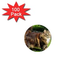 Norwegian Forest Cat Full  1  Mini Magnets (100 pack)