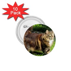 Norwegian Forest Cat Full  1.75  Buttons (10 pack)