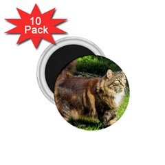 Norwegian Forest Cat Full  1.75  Magnets (10 pack)