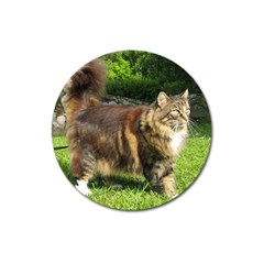 Norwegian Forest Cat Full  Magnet 3  (Round)