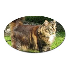 Norwegian Forest Cat Full  Oval Magnet