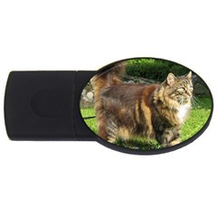 Norwegian Forest Cat Full  USB Flash Drive Oval (2 GB)