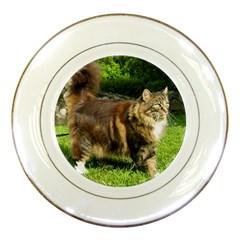 Norwegian Forest Cat Full  Porcelain Plates
