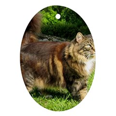 Norwegian Forest Cat Full  Oval Ornament (Two Sides)