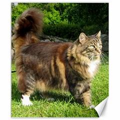 Norwegian Forest Cat Full  Canvas 8  x 10