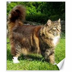Norwegian Forest Cat Full  Canvas 20  x 24