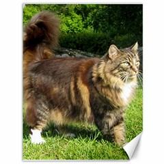 Norwegian Forest Cat Full  Canvas 36  x 48