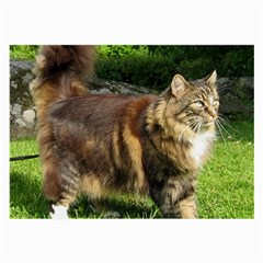 Norwegian Forest Cat Full  Large Glasses Cloth