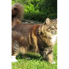 Norwegian Forest Cat Full  5.5  x 8.5  Notebooks