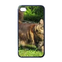 Norwegian Forest Cat Full  Apple iPhone 4 Case (Black)