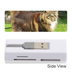 Norwegian Forest Cat Full  Memory Card Reader (Stick)