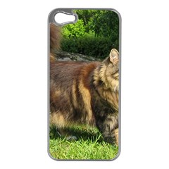 Norwegian Forest Cat Full  Apple iPhone 5 Case (Silver)