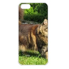 Norwegian Forest Cat Full  Apple iPhone 5 Seamless Case (White)