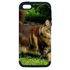 Norwegian Forest Cat Full  Apple iPhone 5 Hardshell Case (PC+Silicone)