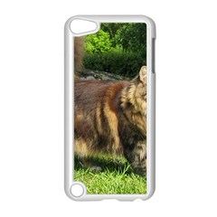 Norwegian Forest Cat Full  Apple iPod Touch 5 Case (White)