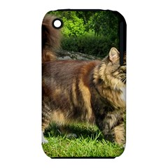 Norwegian Forest Cat Full  iPhone 3S/3GS