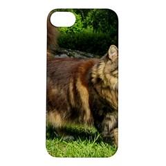 Norwegian Forest Cat Full  Apple iPhone 5S/ SE Hardshell Case