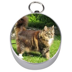 Norwegian Forest Cat Full  Silver Compasses