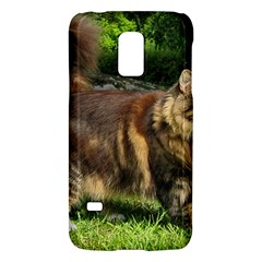 Norwegian Forest Cat Full  Galaxy S5 Mini