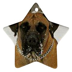 Boerboel  Ornament (Star)