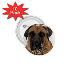 Boerboel  1.75  Buttons (10 pack)
