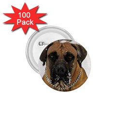 Boerboel  1.75  Buttons (100 pack)