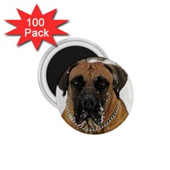 Boerboel  1.75  Magnets (100 pack)