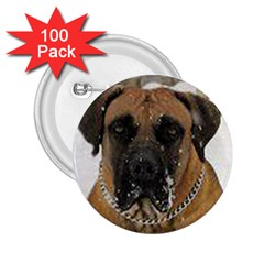 Boerboel  2.25  Buttons (100 pack)