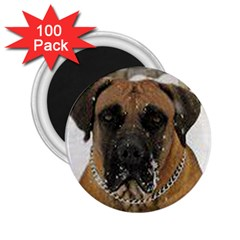Boerboel  2.25  Magnets (100 pack)