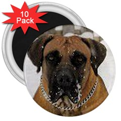 Boerboel  3  Magnets (10 pack)