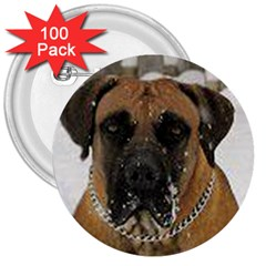 Boerboel  3  Buttons (100 pack)