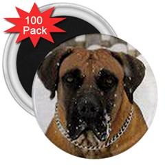 Boerboel  3  Magnets (100 pack)