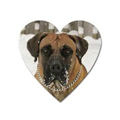 Boerboel  Heart Magnet