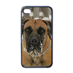 Boerboel  Apple iPhone 4 Case (Black)