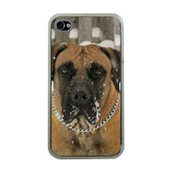 Boerboel  Apple iPhone 4 Case (Clear)