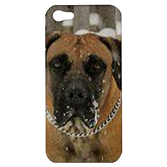 Boerboel  Apple iPhone 5 Hardshell Case
