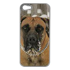Boerboel  Apple iPhone 5 Case (Silver)