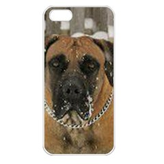 Boerboel  Apple iPhone 5 Seamless Case (White)