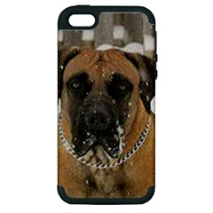Boerboel  Apple iPhone 5 Hardshell Case (PC+Silicone)