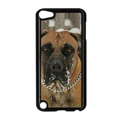 Boerboel  Apple iPod Touch 5 Case (Black)