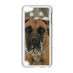 Boerboel  Apple iPod Touch 5 Case (White)