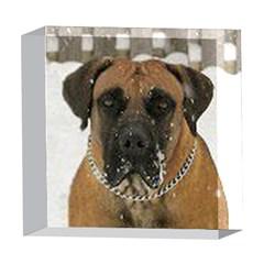 Boerboel  5  x 5  Acrylic Photo Blocks