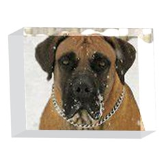 Boerboel  5 x 7  Acrylic Photo Blocks