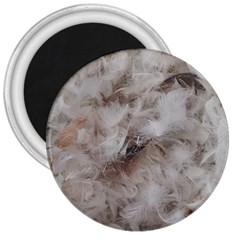 Down Comforter Feathers Goose Duck Feather Photography 3  Magnets